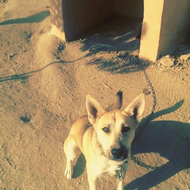Oyun istiyor... #köpek #dog #okul #school #egekoleji
