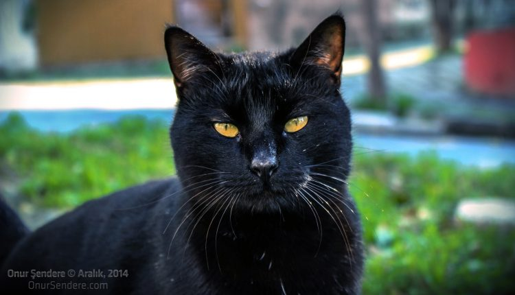 kara-kedi-onur-sendere-aralik-2014